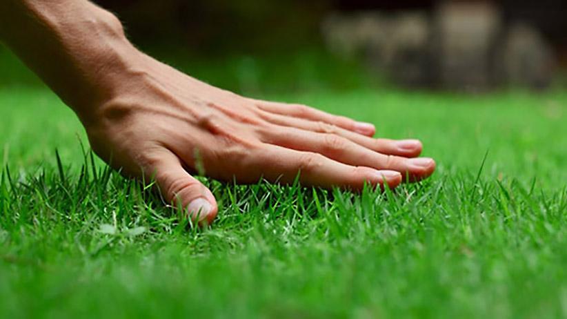Най-добри практики за косене на трева